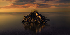 Renaissance (Todd (Whitby61)) Tags: 6stopnd ajax goldenhour lakeontario lee105mmcircularpolarizer longexposure summer2016 toddmurrison x4ndfilter beach canon6d morning sky water renaissance stump submerged clouds sunrise exterior revitalize ontario canada standing composition ngc