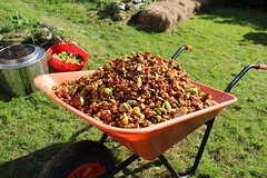 Apple cake mixture which has been in an apple press (Local Food Initiative) Tags: permaculture apple day apples press pressing cider group sustainable orchard