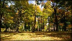 Autumn (mala singh) Tags: fall autumn colours foliage usa northamerica season