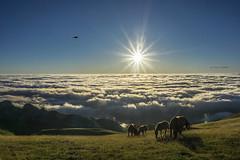 Amanecer (EXPLORE) (Jabi Artaraz) Tags: jabiartaraz jartaraz zb euskoflickr yeguas paz silencio montaa bruma niebla sol sun amanecer sunset sunrise contraluz gorbea araba lava bizkaia basquecountry euskalherria paysbasque