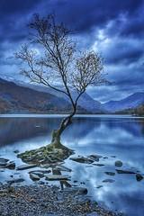 The lone tree, llyn padarn (paul blakeway) Tags: lake tree snowdonianationalpark snowdonia llynpadarn longexposure northwales water wales beautiful scenic tranquility atmospheric lonetree