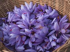 Safran - Explored (- Lythy -) Tags: safran mund schweiz gewürz blüte awesomeblossoms