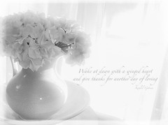 Gratitude (lclower19) Tags: iphone gratitude black white bw hydrangea pitcher ewer window text kimklassen texture 4752 522016 odt