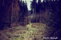 Thüringer Wald (schrieber_fotografie) Tags: thüringen wald ilmenau deutschland nebel bäume winter grün farben sonne strahlen kalt düster wandern landschaft outdoor daum pflanze europe