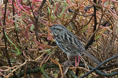 Making a Mess On Yourself (UnsignedZero) Tags: animal bird birds california item object out outdoor outdoors outside outsides paloalto paloaltobaylands rainy weather