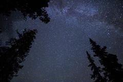 Stars C (traversmesyeux) Tags: milkyway stars astrophotography trees tree jasper national park sky nocturnal rockies canada canadian alberta canon canon750d canonphotography canont6i t6i 750d canonkissx8i