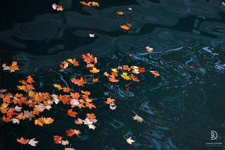 Autumn Messages