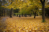 Autumn (Alexander Jones - Documentary Photography) Tags: documentary photography flora bute park landscape autumn fall orange leaves cardiff south wales nikon d3000