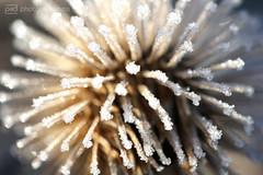 sunday morning 04.12.2016 -p4d- 080 (photos4dreams) Tags: sundaymorning04122016p4d winter photos4dreams p4d photos4dreamz photo rauhreif frosty rime hoarfrost walk sunny sonnenschein sonne