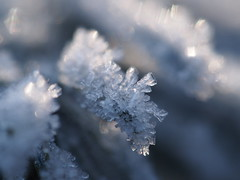 Ice (michaelmueller410) Tags: eis frost frosry hoarfrost fir needle cold winter