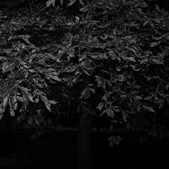 TERRA INCOGNITA (Grant Simon Rogers) Tags: grantsimonrogers  fujifilmx100t flasher flashefx20 flashing fujiflasher themanwhoflashedattrees blackwhite bw photography tree trees flnerie flneur thefirst10000 jungheart antiwarphotography middleenglish middleaged littleengland englandshire london southlondon southlondonflashing southwark animamundi individuation terraincognita historyisjustonefuckingthingafteranother idontalwaysunderstandpoetry aconversationwithalanbennett photopsychotherapy