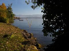 Autmn at the lake (Niclas Matt) Tags: lake water underwater coldwaterdiving coldwater autumn autmn leafs trees tree swiss switzerland