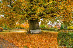 colours of autumn (FleshTriad) Tags: color colour autumn farben herbst laub leaves hdr