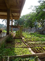Garden shade (program monkey) Tags: green vietnam hanoi hadong garden community construction