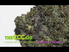 Strain Review Saturday Ep. 10: Grape Jelly Donut (kmobocunib1970) Tags: buds cannabis ccc420 cured fire indica nug resin sativa strain strainreview theccc420 weed