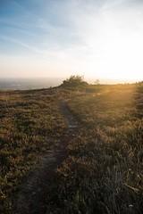 Vers Jersey (Pedropicco) Tags: montdebesneville manche 50 cotentin france bassenormandie besneville jersey soleil sun brume mist path chemin coucherdesoleil sunset