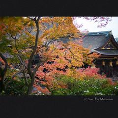 北野天満宮 (Eiji Murakami) Tags: japan kyoto autumn sony α7r2 alpha7r2 voigtlander heliar 日本 京都 秋 北野天満宮
