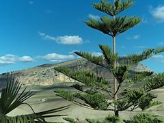 la campagna (eliobuscemi) Tags: campagna verde sicilia