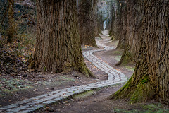 curved path (phlickrron) Tags: path outdoors regensburg tree nature curved autumn cold bavaria oberpfalz