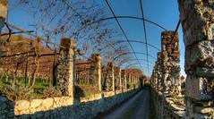 Topie di vigne canavesane (rasocarlo66) Tags: viverone abbazia abbaziasanmichele francigena viafrancigena pergolato vigna
