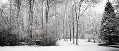 Winter Song 339/366 (Watermarq Design) Tags: winter winterscene panoramic snow snowy snowyday project366 blackandwhite wintersong