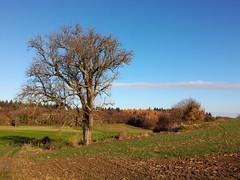 Bruchsaler Hgelland im November (infactoweb) Tags: bruchsal eichelberg obergrombach wandern hgel hgelland kraichgau infactoweb