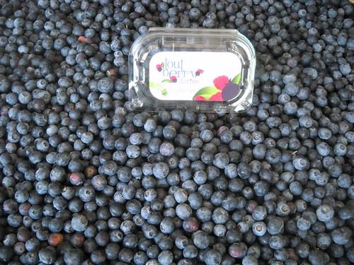 Blueberries everywhere aa Jun 1, 2015 (1)