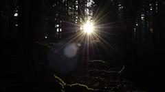 Through The Trees (benn.clarke) Tags: uk trees light england sunlight forest landscape woods nikon scenery shadows darkness outdoor hampshire brightlight manual sunbeam newforest sunray lensflair lightstreaks beautifulearth reflectionoflight