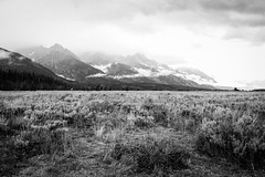 Grand Tetons (Corvus tristis) Tags: blackandwhite mountains nature tetons nationalparks grandtetonnationalpark gtnp