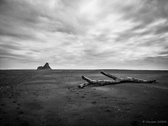 Sand & Wood (Alexandre DAGAN) Tags: newzealand blackandwhite white black beach blackwhite noir phone noiretblanc samsung galaxy blacknwhite s3 plage blanc noirblanc tlphone karekarebeach nouvellezlande siii