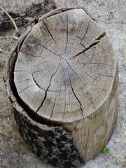 DSC02596 (omirou56) Tags: wood outdoor greece 43 sonydschx9v