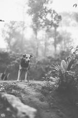 IMG_6225 (athingcalledlife) Tags: blackandwhite india green art nature rain photography colours lush coorg virajpet vsco