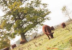 Hatfield_Forest-54 (Eldorino) Tags: park uk morning autumn trees nature forest sunrise landscape countryside nikon britain centre jour hatfield bishops stortford essex hertfordshire stanstead hatfieldforest