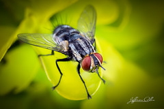 Fly (Jefferson Allan - Photographer) Tags: macro natureza infrared paisagens fotografiacampinas empilhamentodefoco jeffersonallan fotografojeffersonallan