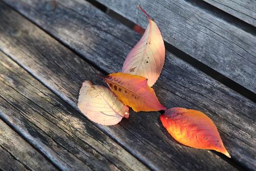 枯れ葉の音
