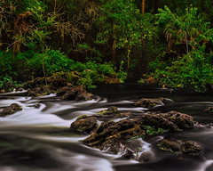 Hillsborough River Rapids (josesuro) Tags: film tampa landscapes florida films fineart rapids velvia rivers 4x5 largeformat hillsboroughriver 2013 sironar ebonysv45ti rodenstock210mmf56aposironars jaspcphotography