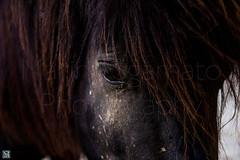 Diamond Eyes (marinasgamato) Tags: horse eye nature animals hair wildlife loveliness