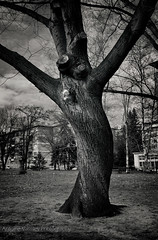 Scary tree (AVasilev) Tags: park white black tree scary sofia   zaimov
