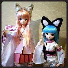 Immigrants from Japan to Finland! (SpicaNio) Tags: doll miyuki 13 azone amane animedoll azoneinternational sqlab sqlabdolls vulpesdiva azonedirectstore
