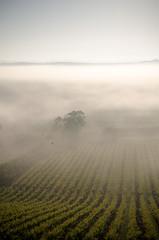 Neblina matinal (Alice S) Tags: nevoeiro videiras neblina amanhecer torres vedras sao pedro cadeira portugal