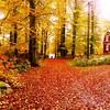 Veckans bildsvep. #Höst denna #Ljuvligt vackra #Årstid #Sverige #Sweden (svenskvagguide) Tags: höst ljuvligt årstid sverige sweden