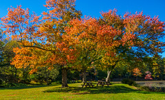 Benches Under Red Trees (Catskills Photography) Tags: hbm benches fall autumn trees leaves red park landscape canong15 foliage