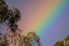 Rainbow (Joel Bramley) Tags: rainbow trees australia gum weather spring colours colors