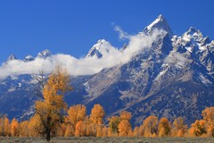 Alone but together (alideniese) Tags: grandtetonnationalpark wyoming usa mountains landscape fall autumn trees yellowleaves snow bluesky sunny morning