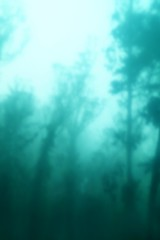 Into the Trees (Johnny Grim) Tags: trees fog mist blur ethereal
