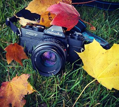 It's a perfect day for an analogue autumn photo shoot. Go out today and shoot some film! #analogue #film #35mm #photography #picoftheday #filmisawesome #filmisnotdead #filmisalive #autumn #colourful #goout #ishootfilm #plymouth #devon #uk #england #oceanc (Lomomograph) Tags: filmisnotdead 35mm autumn picoftheday analogue uk colourful plymouth goout photography oceancity film devon filmisawesome minolta filmisalive england ishootfilm