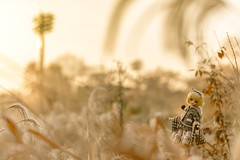 Towards the end of fall (Tee_see_) Tags: doll mdd dollfie dollfiedream