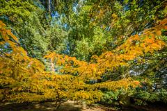 Oxford University Harcourt Arboretum. (anthony60morris) Tags: oxford university harcourt arboretum 1 anthonymorrisanthony p morrisanthony morris farmoor southoxfordshiredistrict england unitedkingdom gb anthonypmorris oxforduniversity harcourtarboretum oxfordshire
