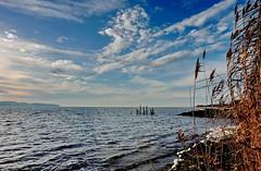 Wind (Wunderlich, Olga) Tags: rügen insel deutschland schilf möwe alterbootssteg landschaft landscape himmel wolken wind wellen mecklenburgvorpommern vorpommernrügen