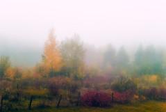 Autumn through the fog / L'automne  travers la brume (tad888) Tags: boulements boulements autumn automne arbres trees colours couleurs color fog brume forest